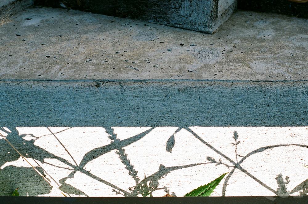LAROQUE-filmFE-03.jpg