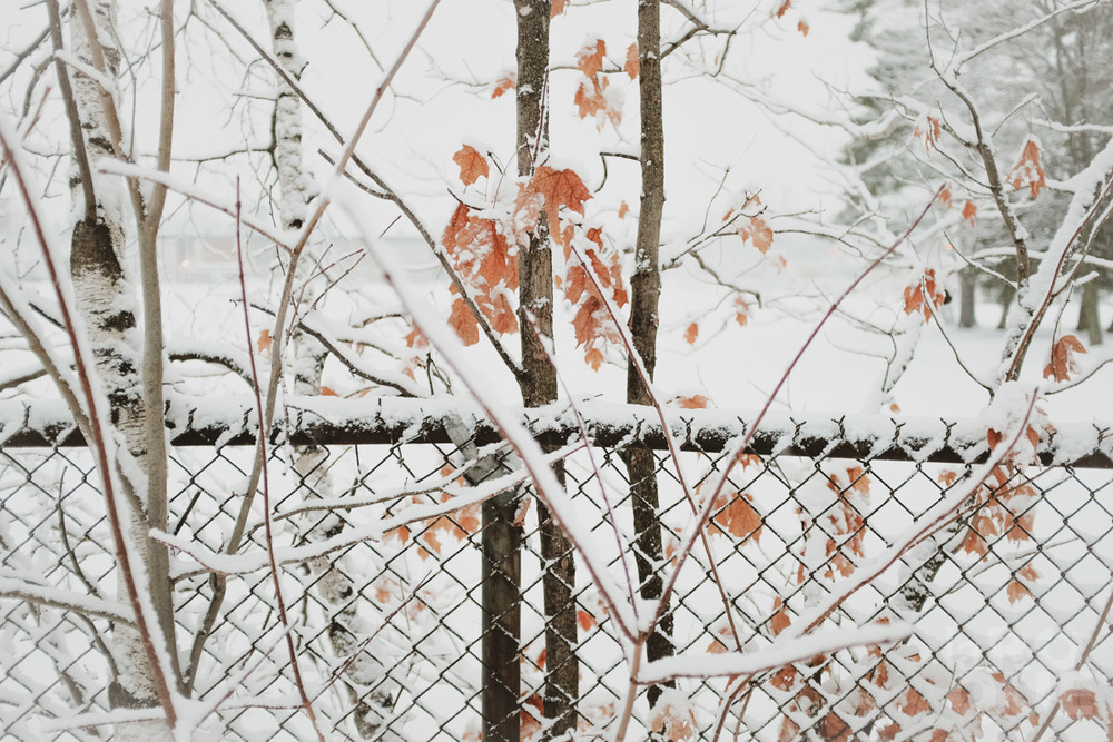 LAROQUE-snowblindness-04.jpg