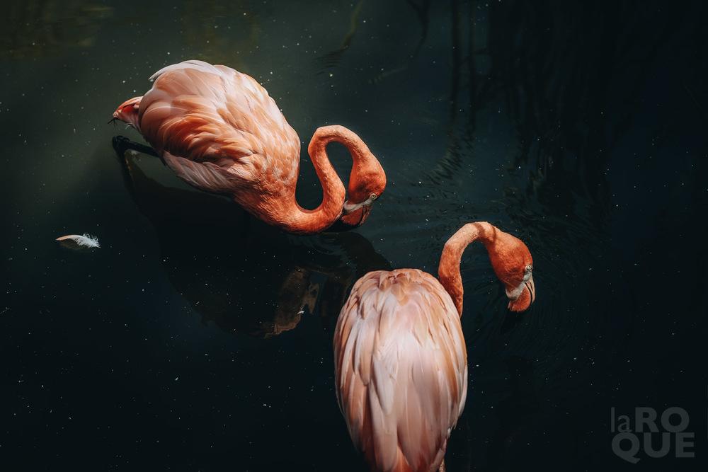 LAROQUE-animals-08.jpg