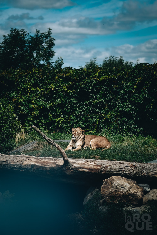 LAROQUE-animals-12.jpg