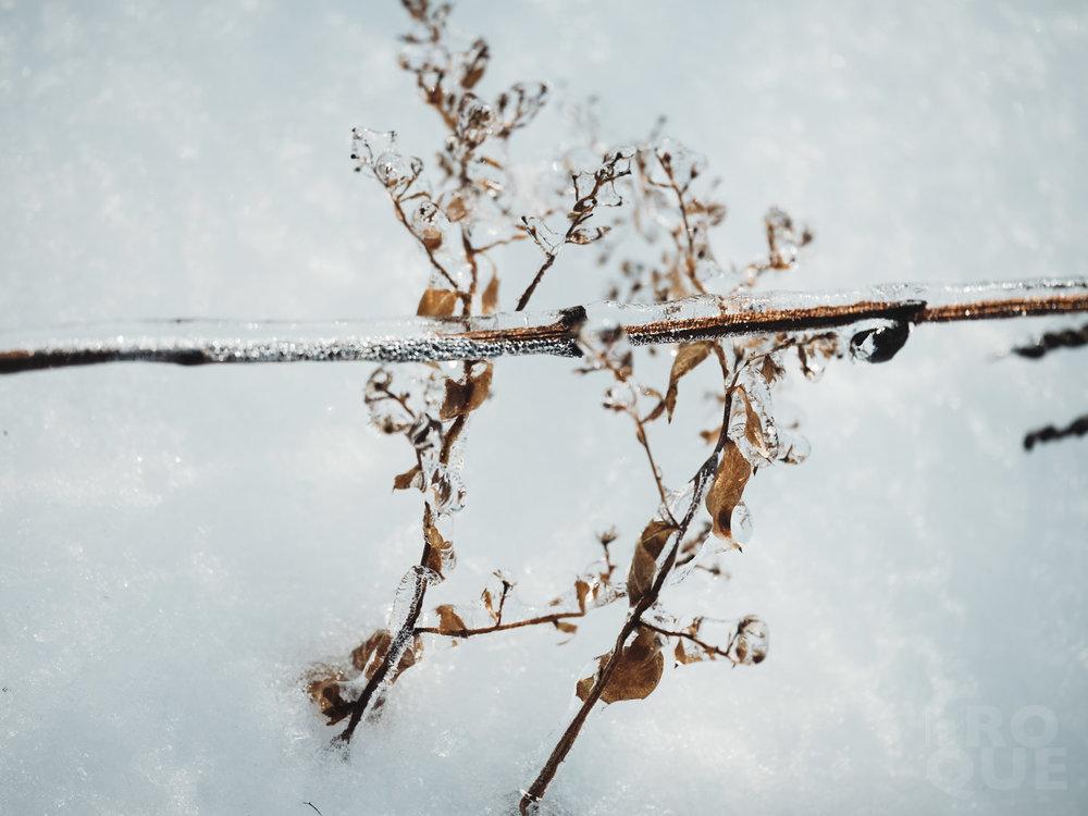 laROQUE-iceworld-002.jpg