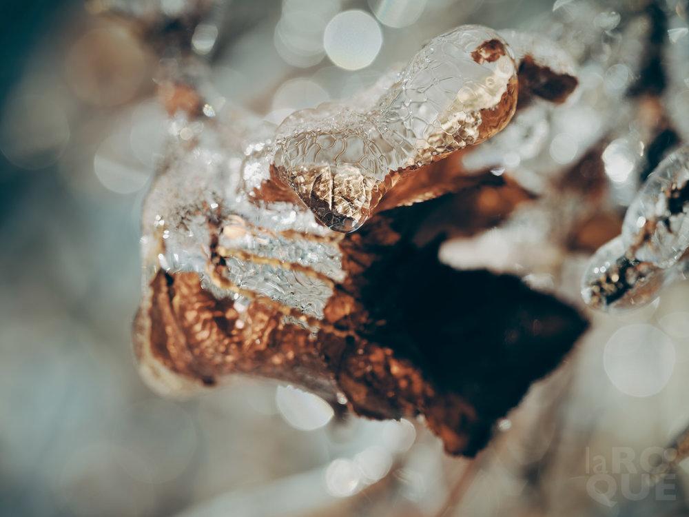 laROQUE-iceworld-009.jpg