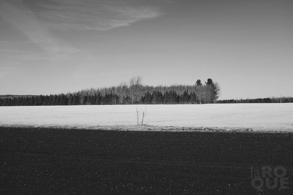laROQUE-spring-forward-001.jpg