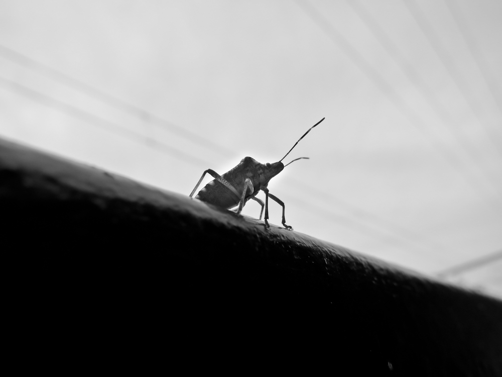 A bug that is king stands on a railing
