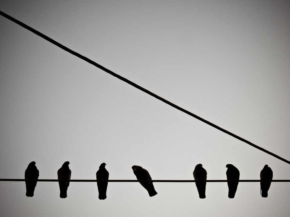 A group of birds sit on a telephone wire