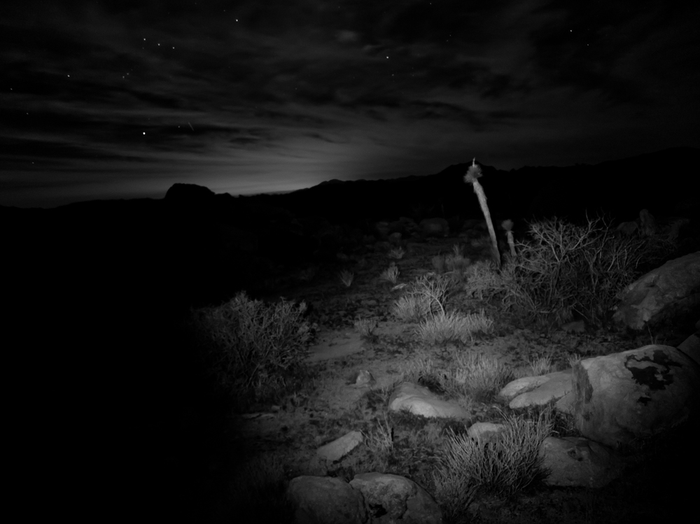 joshua-tree-night