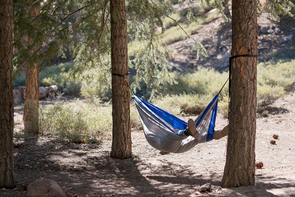 camping-hammock-trees-willventures.jpg