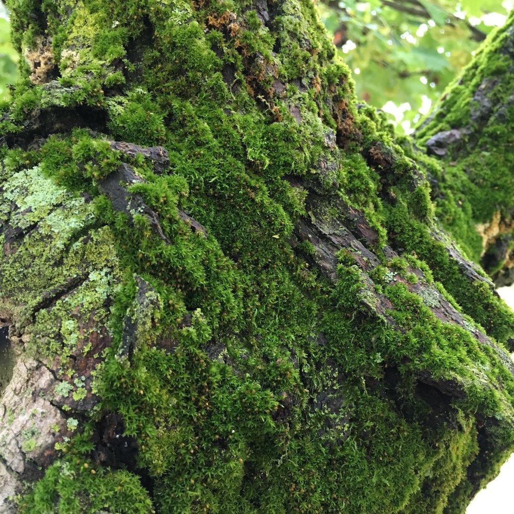 Moss nestled in tree bark