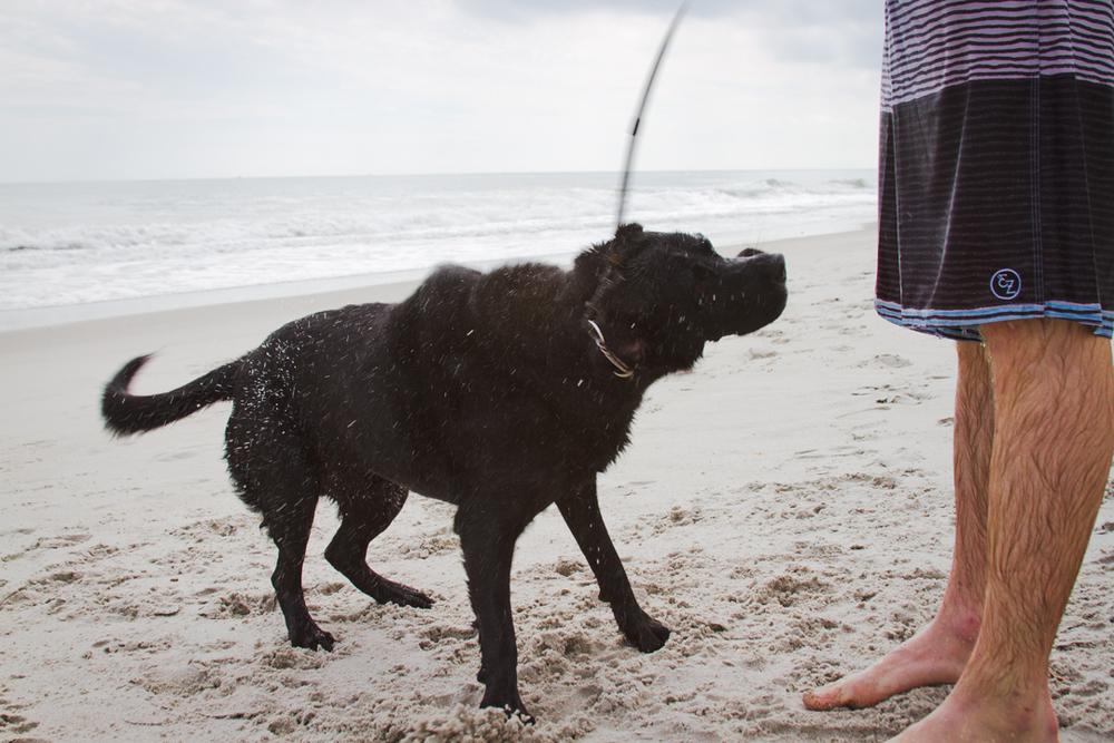 Traditional dog-shaking-water shot.