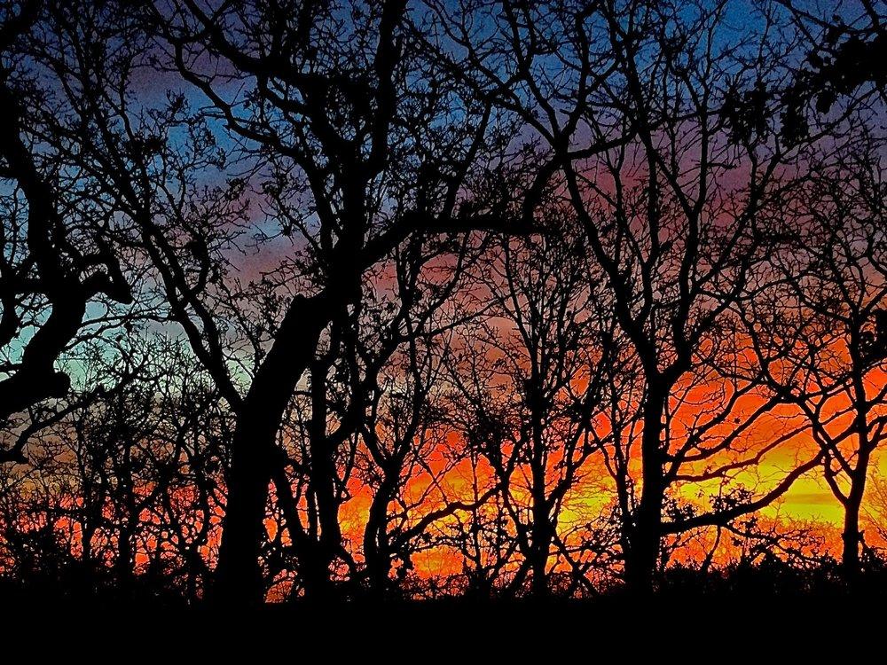 """Branches"" by Alan S. Garrett"
