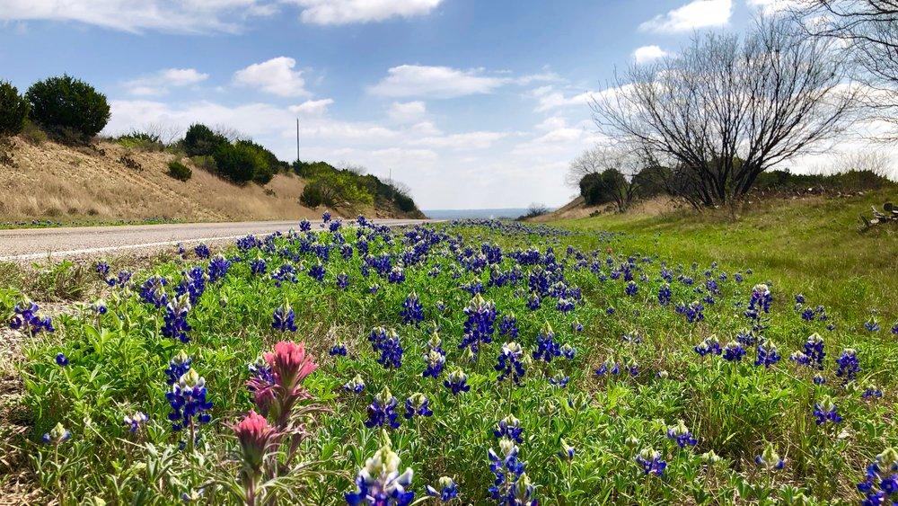 Bluebonnets line the side of a highway near Rochelle, Texas on March 25th, 2018  Image taken by Alan S. Garrett