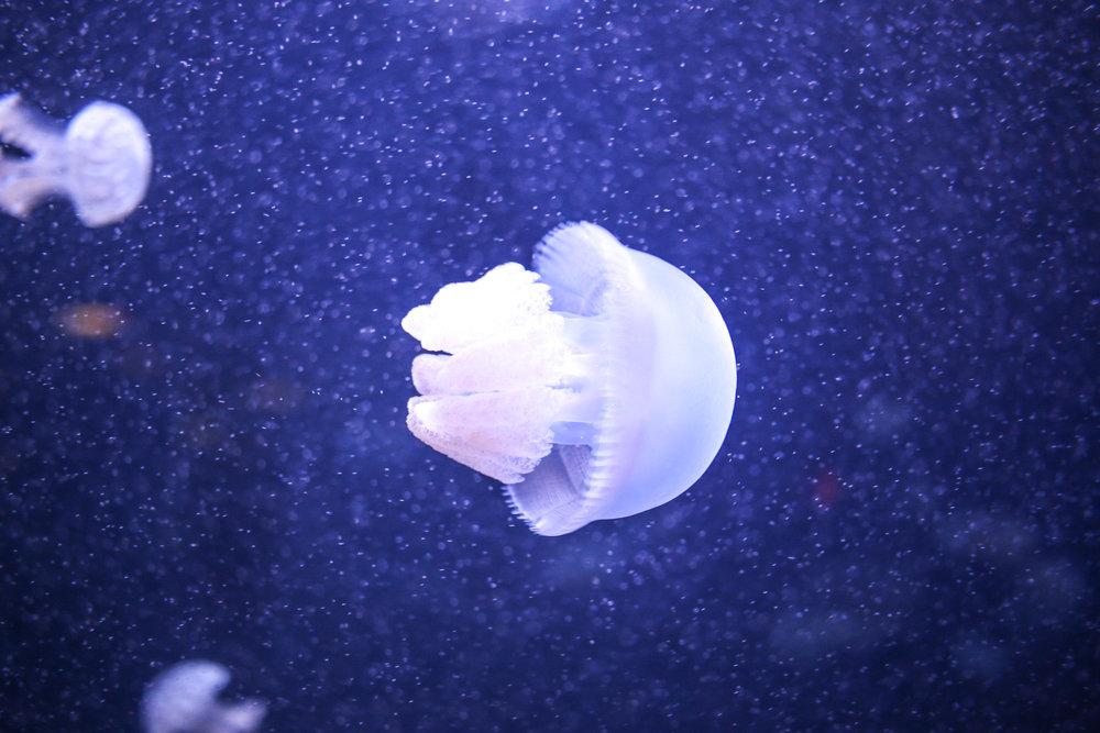 Aquarium 7-14-18-114.jpg