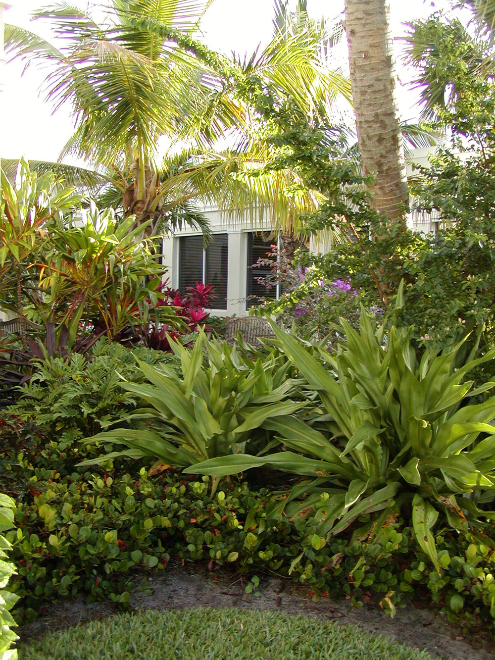 Gentile Holloway O'Mahoney Landscape Architects Planners Environmental Consultants Tropical Plantings.jpg