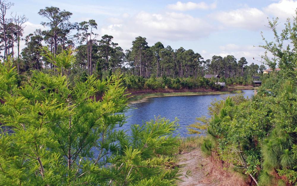 Abacoa Greenway Wetlands.jpg