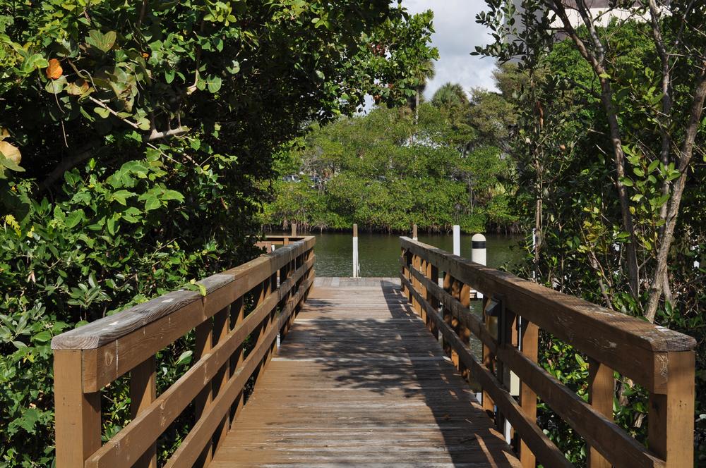Burt Reynolds Park Palm Beach County Florida Boardwalk through Mangroves.JPG