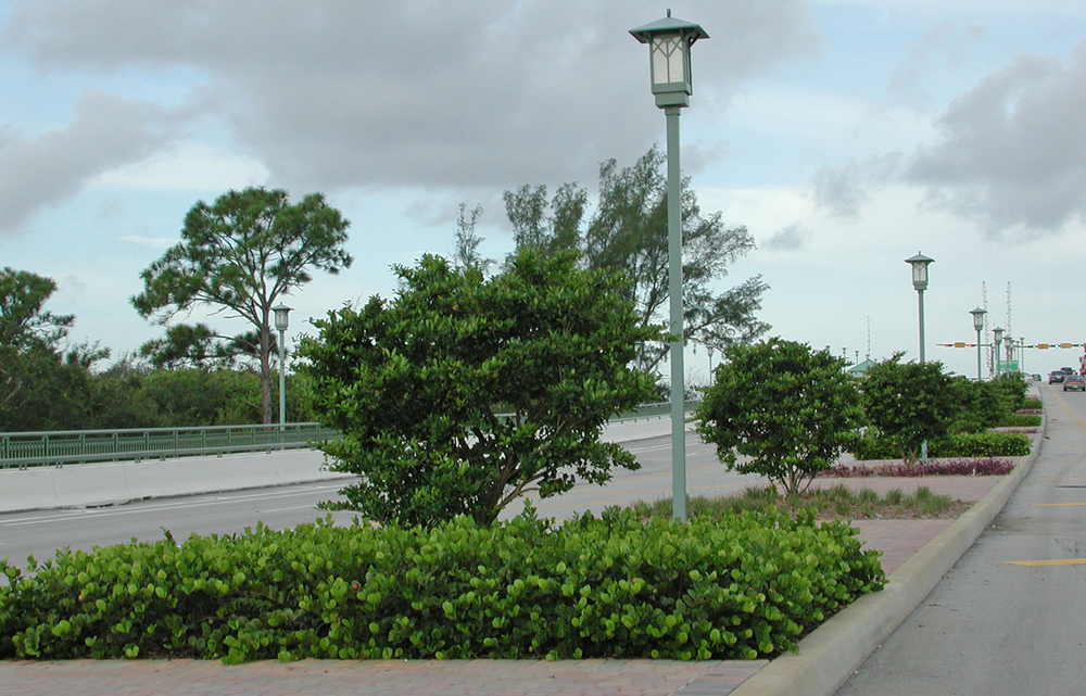 Donald Ross Road Palm Beach County Florida Landscape Bridge Planting with Specialty Lights.jpg