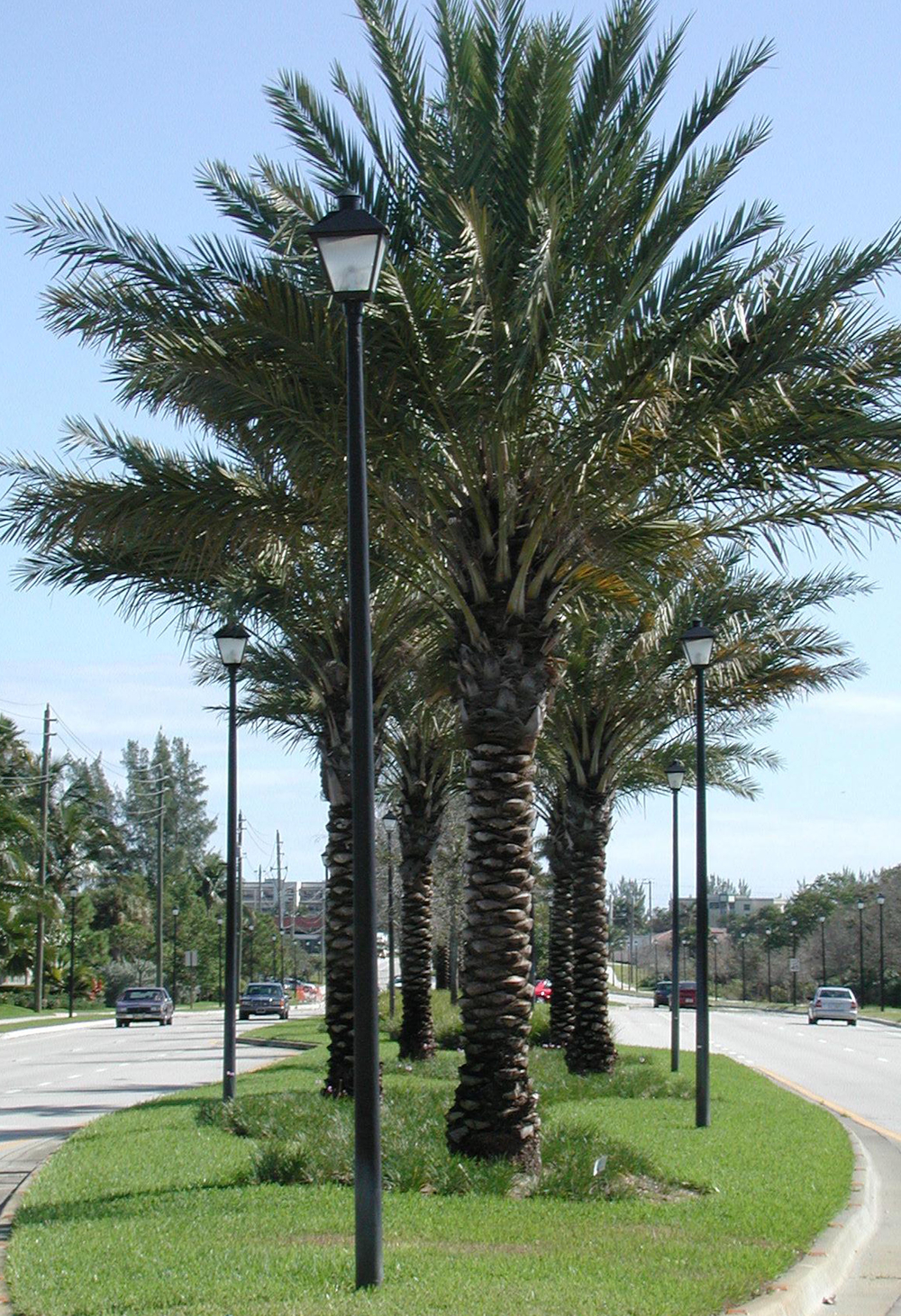 Donald Ross Road Palm Beach County Florida Landscape Formal Plantings.jpg
