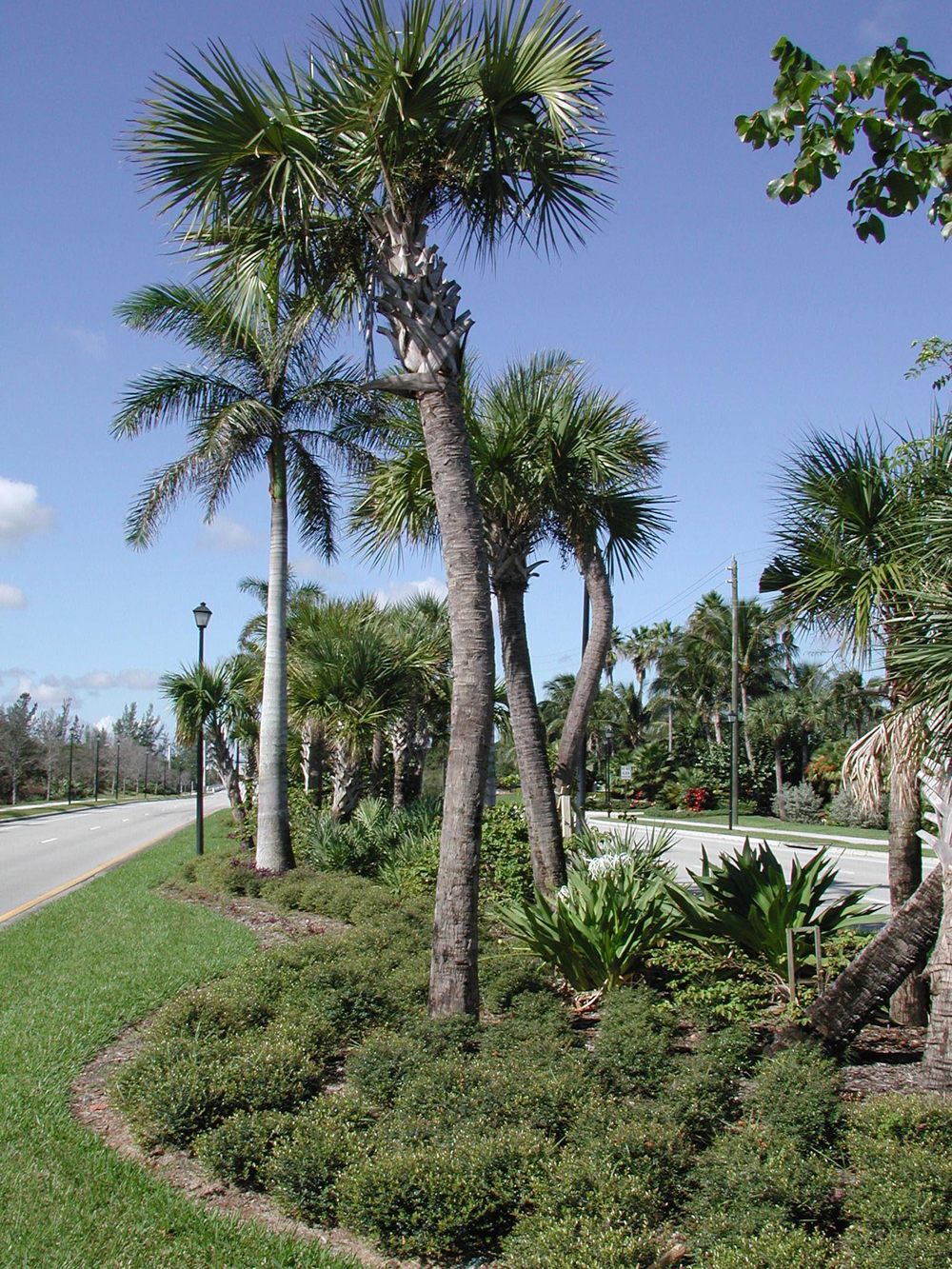 Donald Ross Road Palm Beach County Florida Landscape Native Plantings.jpg