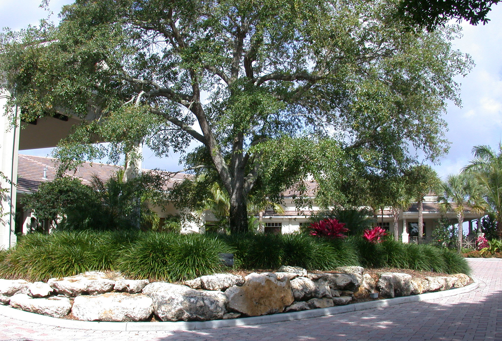 Loxahatchee Golf Club Jupiter Entry Live Oak.jpg