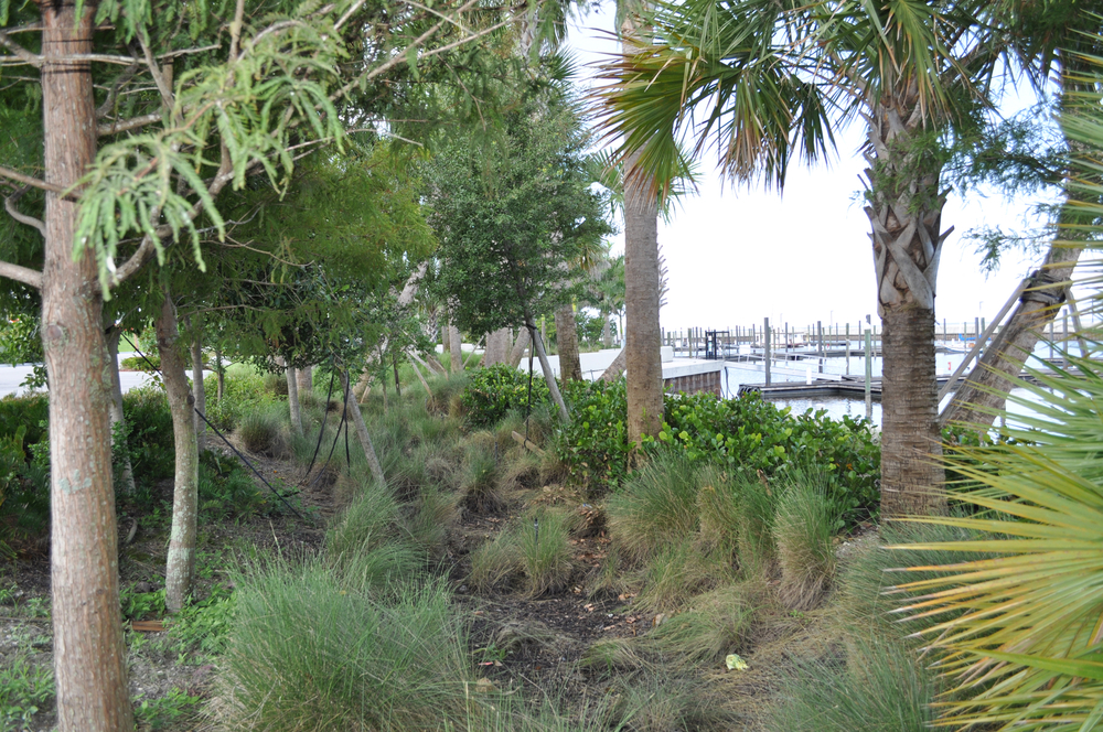 Pahokee Marina and Campground Florida Bioswale Retention Native Plantings.JPG