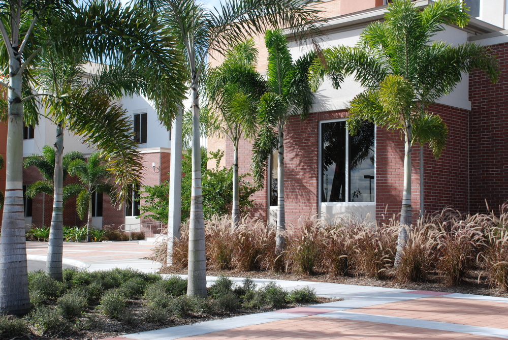 Palm Beach County Fire Rescue Training Facility Landscpaing.JPG