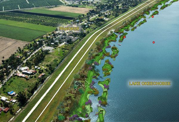 Pahokee Eco Island Study Conceptual Littoral Plantings.jpg