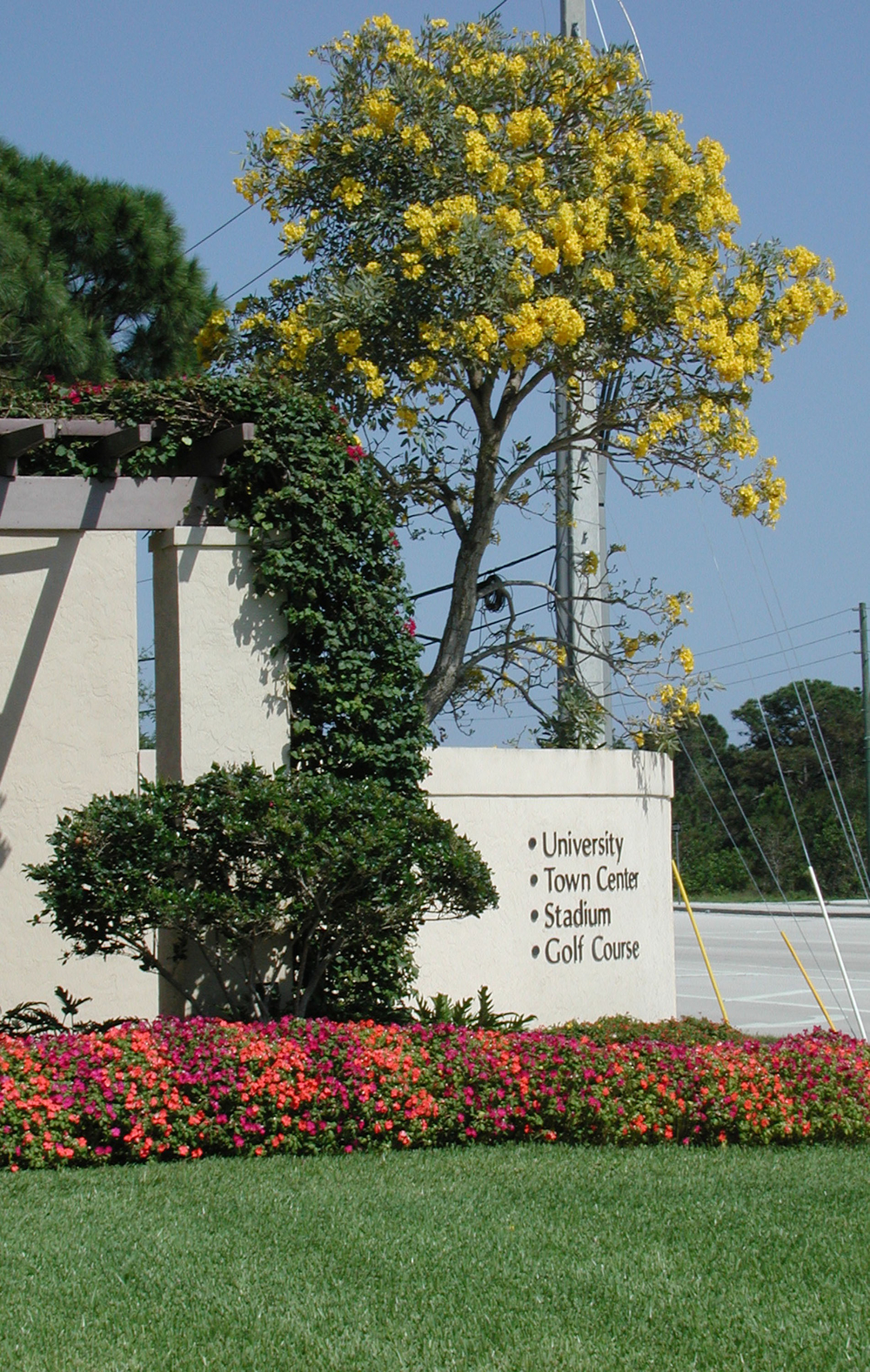 Abacoa DRI Jupiter Florida Entry Gateway Yellow Tabebuia.jpg