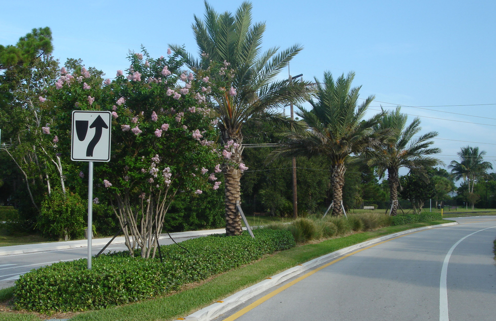 Toney Penna Drive Jupiter Florida Date Palms in Median.jpg