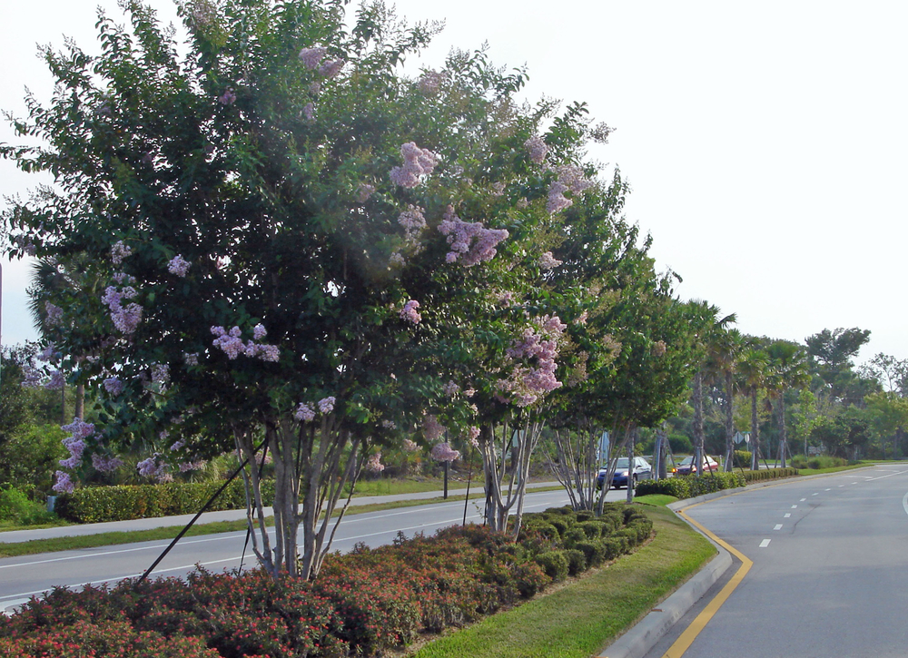Toney Penna Drive Jupiter Florida Median Landscape.jpg
