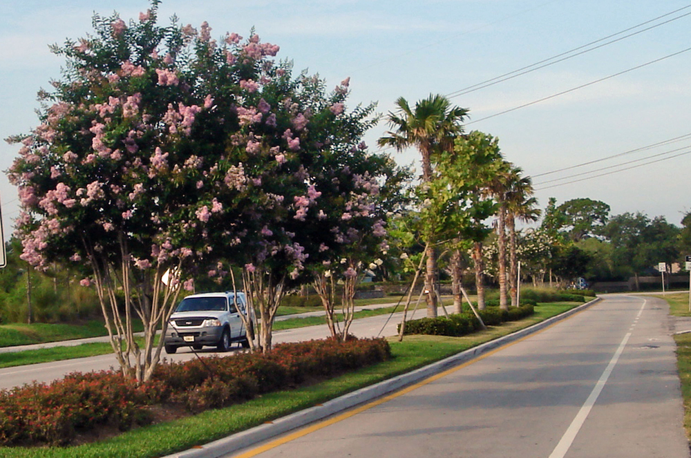 Toney Penna Drive Jupiter Florida Median Landscape Palms.jpg