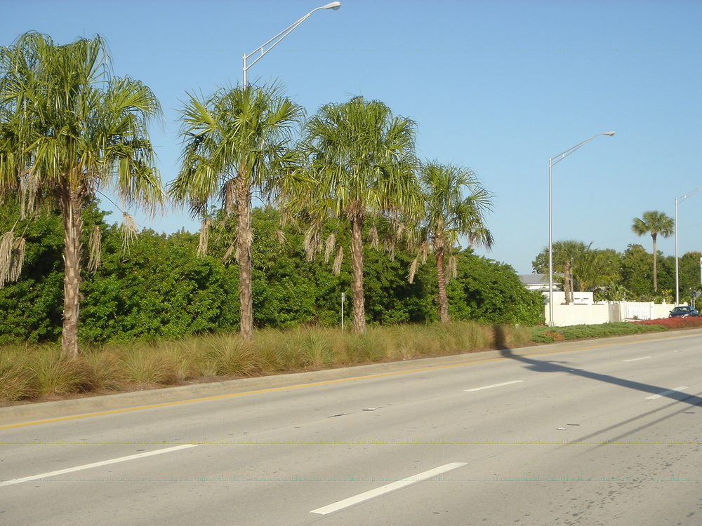 Kanner Highway Stuart Florida FDOT Native Median.JPG