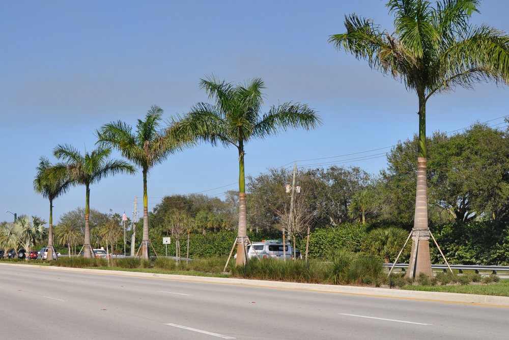 Alternate A-1-A Jupiter Florida Indiantown Road to Donald Ross Road Royal Palms.jpg