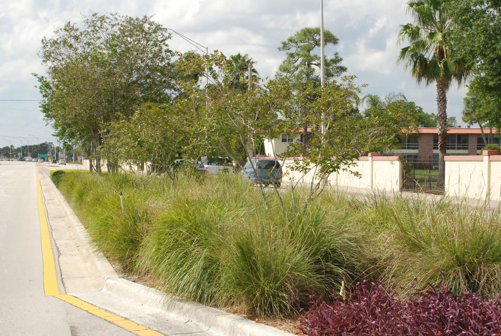 Kanner Highway Stuart Florida FDOT Native Grasses.JPG