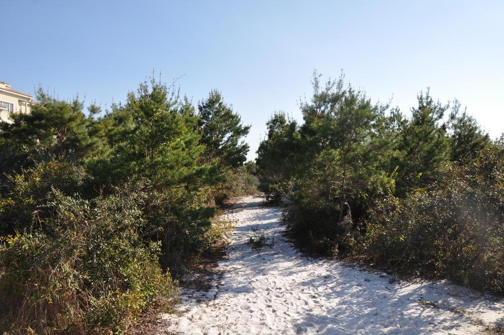 Tierra Del Sol Jupiter Florida Scrub Preserve Area.JPG