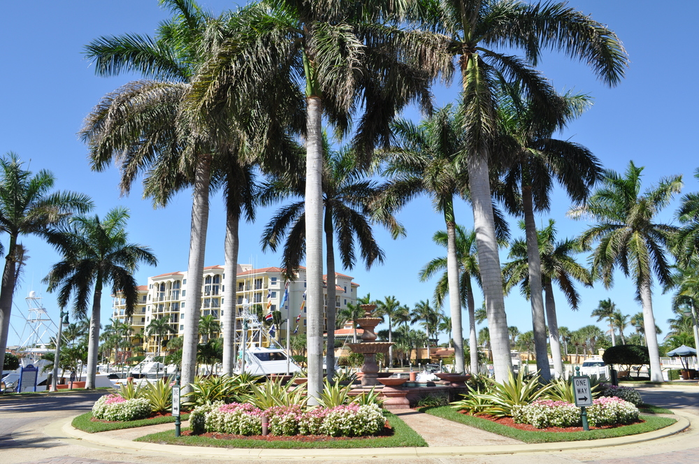Jupiter Yacht Club Florida Entry Circle Annuals Royal Palms.JPG