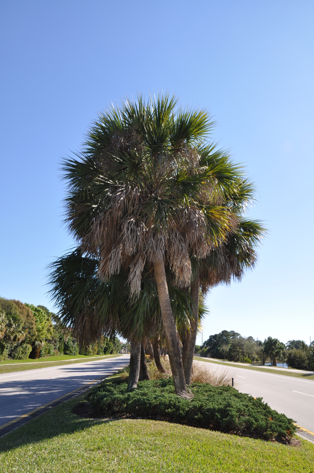 Indian Creek Parkway Jupiter Florida Median Landscaping.JPG