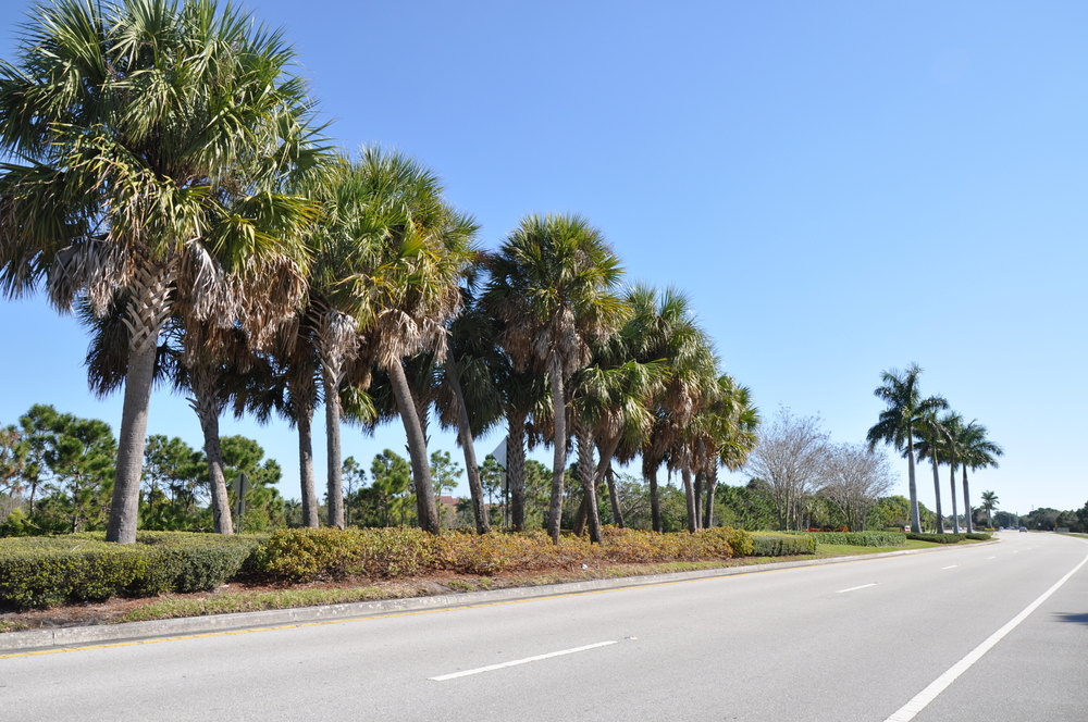 Indian Creek Parkway Jupiter Florida Native Florida Plants.JPG