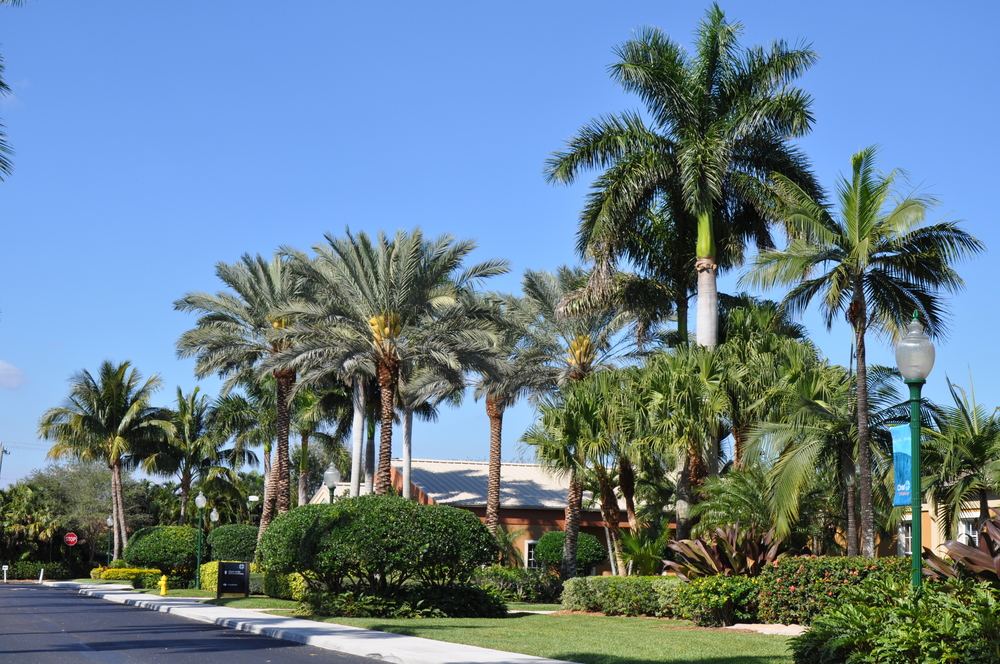 Christ Fellowship Church PBG Date Palms.JPG