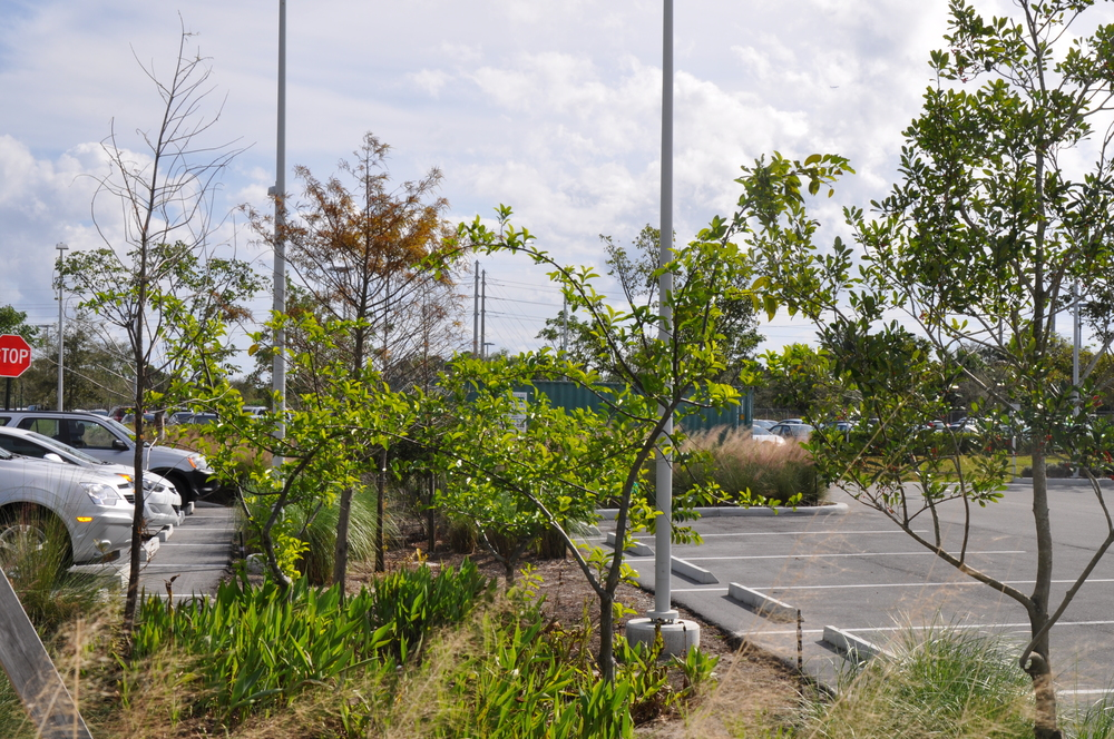 Max Planck  Florida Institute Bio Swale in Parking Lot.JPG