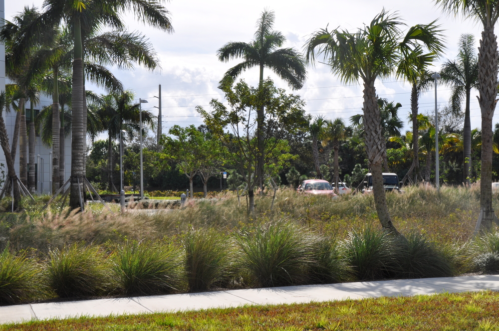 Max Planck  Florida Institute Bio Swale Planted Retention Area.JPG