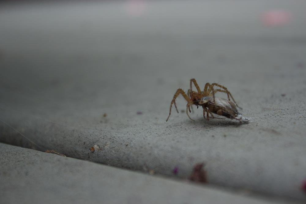Spider v. Beetle