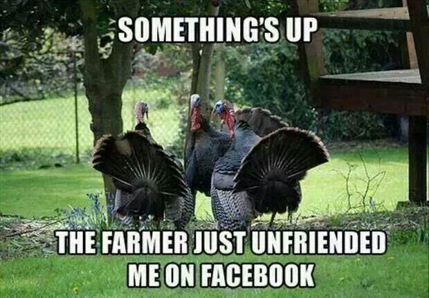Thanksgiving-Turkey-Meme-1.jpg
