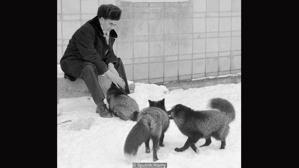 A photograph of Belyaev, petting some very cuddly-looking foxes that look very happy to see him.
