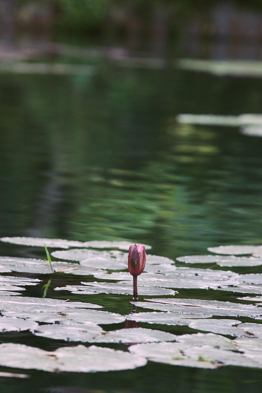 Brazil, Rio de Janeiro, Landscape, Travel photography, architecture, street photography, botanical gardens, jardins, flowers