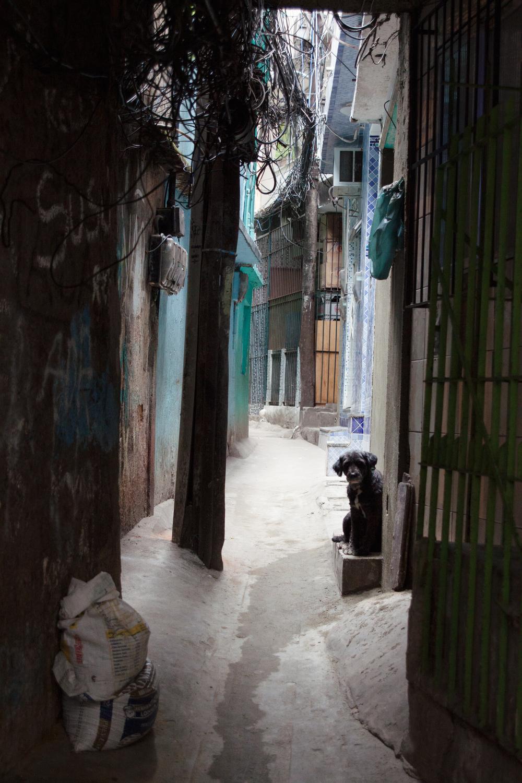 Rio de Janeiro, Brazil, landscape, travel photography, Rocinha, favela, dog