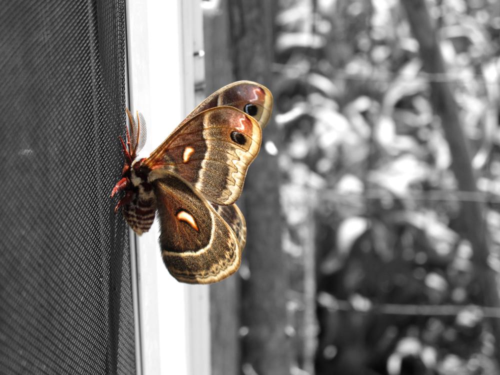 IMG_1829, only moth.jpg
