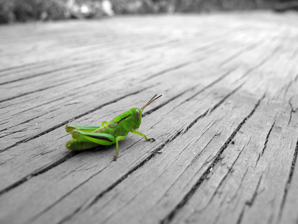 IMG_5139, bw but grasshopper sharper.jpg