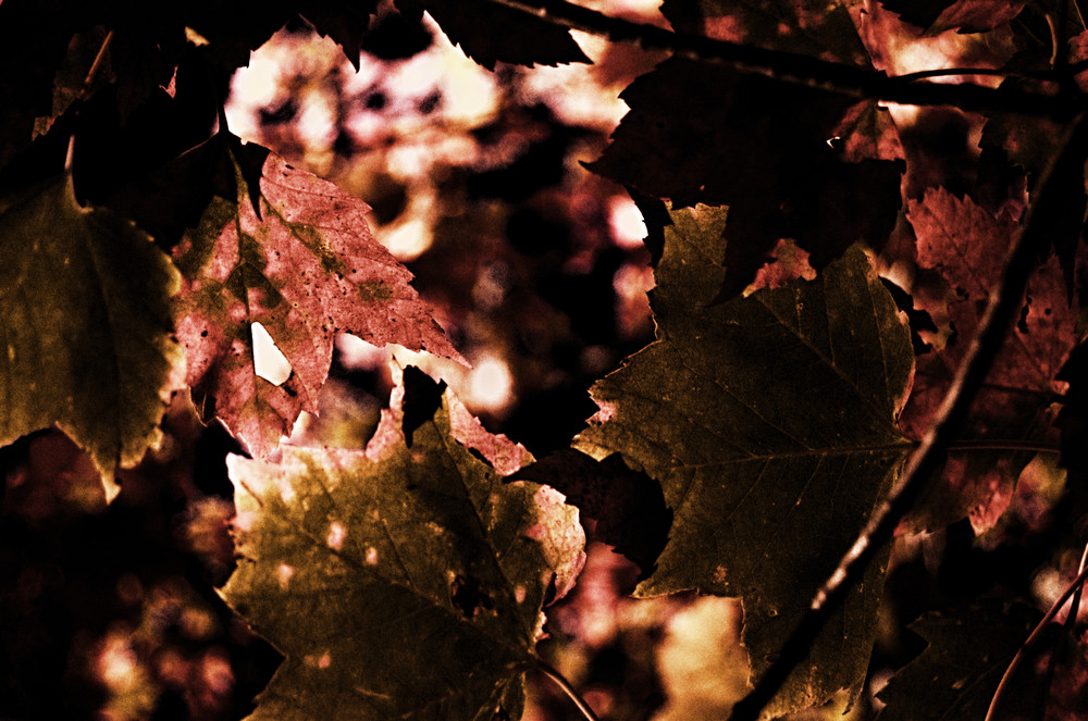 Edited photo of fall leaves.