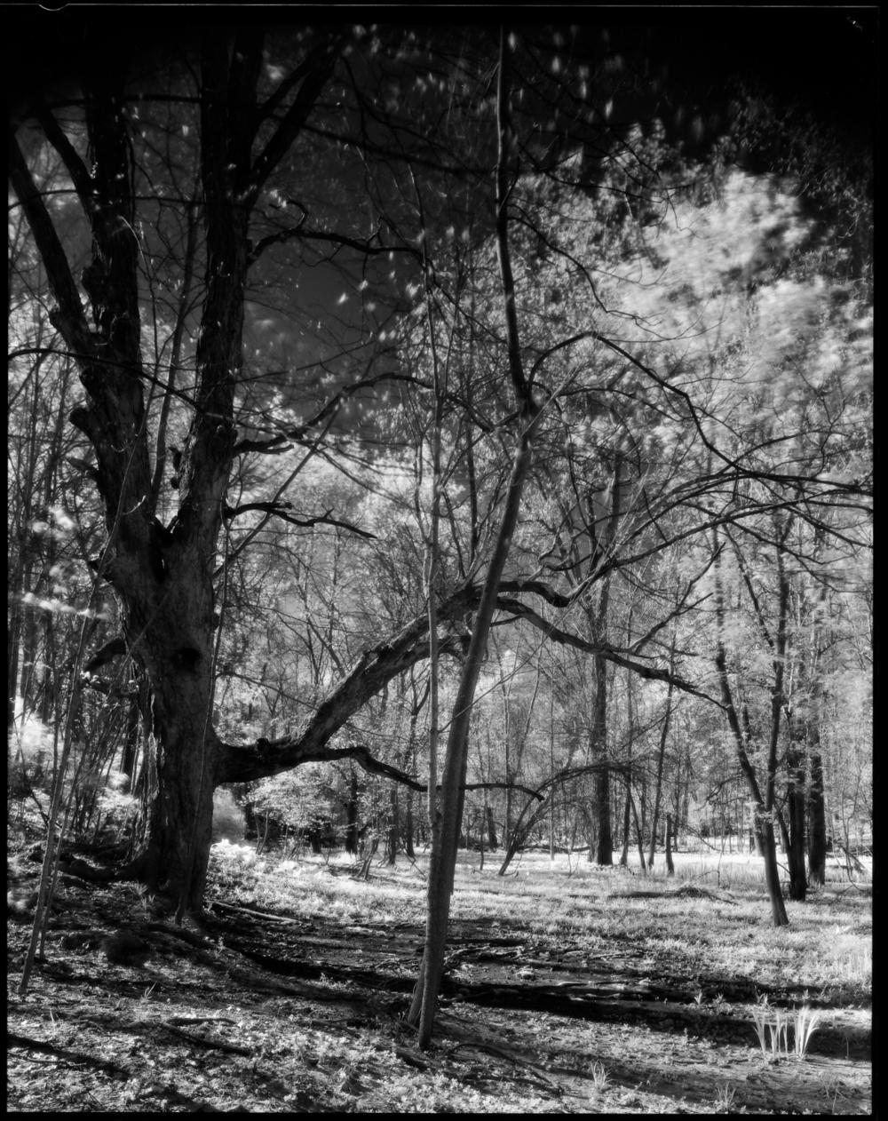 Litzenberg Park 1