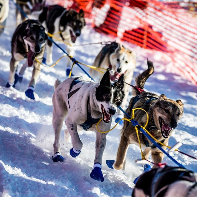Iditarod Willow Start March 2018